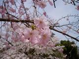 Sakurahimeji3