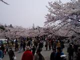 Sakurahimeji4