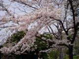 Sakurahimeji6