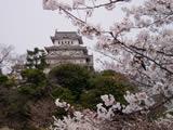 Sakurahimeji_1
