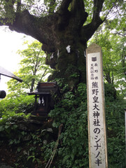 1709karu_sina