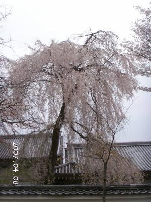 Daigoji_1